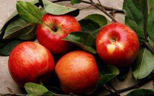 Producteur de pommes